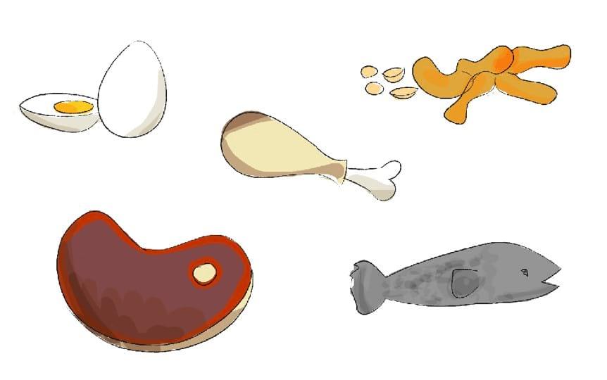 שימוש בחלבונים מן החי בתפריט יומי מאוזן ובריא